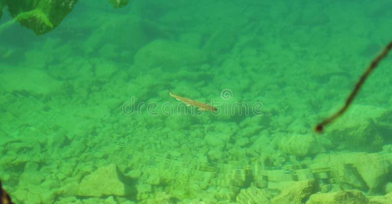 Fisk i kristallsmaragdsjön arkivbild