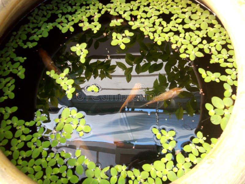 Fisk i kruset royaltyfria bilder