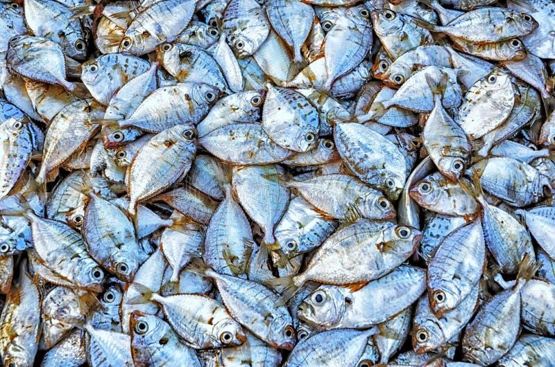 Fisk i marknad royaltyfri fotografi