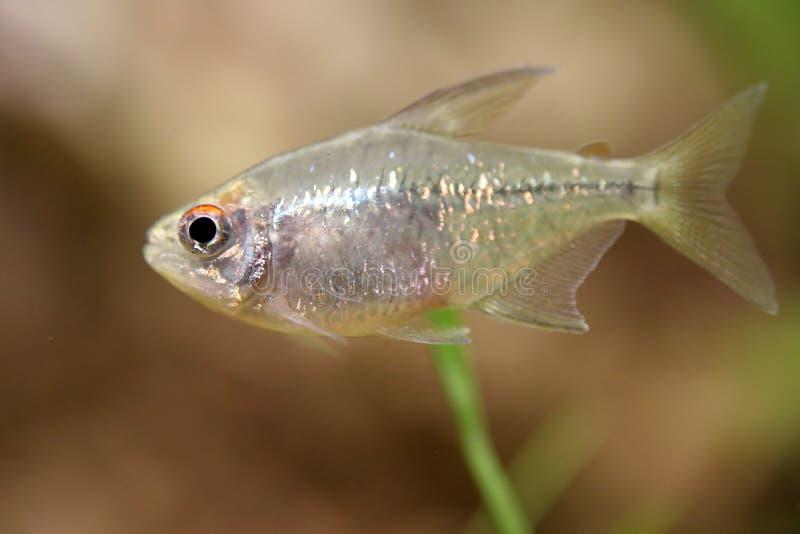 fisk little royaltyfri foto