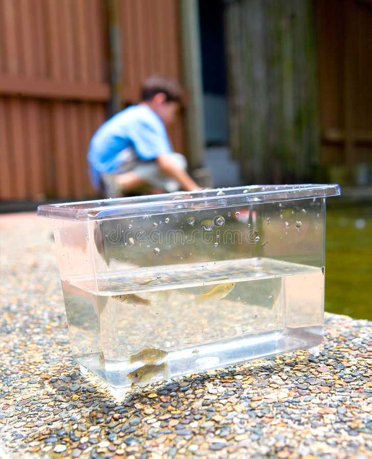 fisk little behållare royaltyfri bild