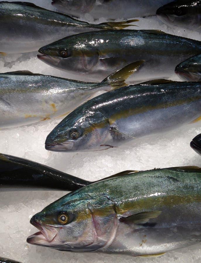 Fisk på is arkivbild