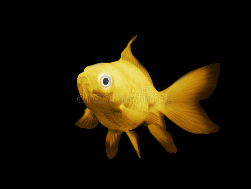 fisk på en svart bakgrund arkivfoton