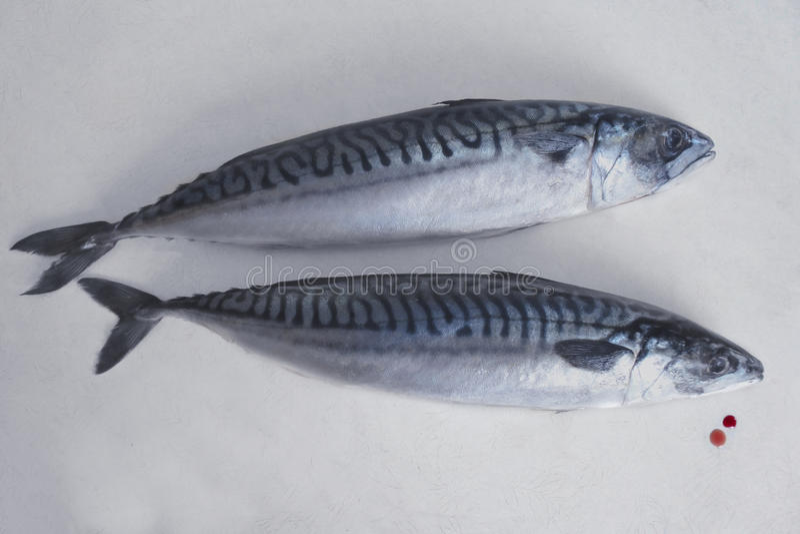 Fisk på tabellen royaltyfri fotografi