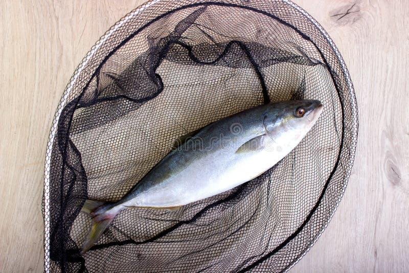Fisk som fångas i det netto arkivfoto
