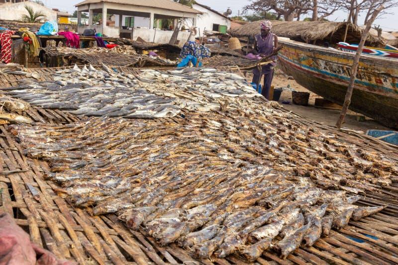Fisk som torkar på Tanji royaltyfri fotografi
