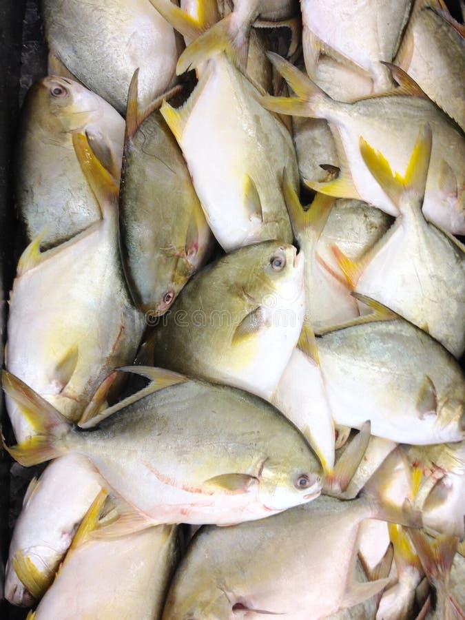fiska försäljningen arkivfoton