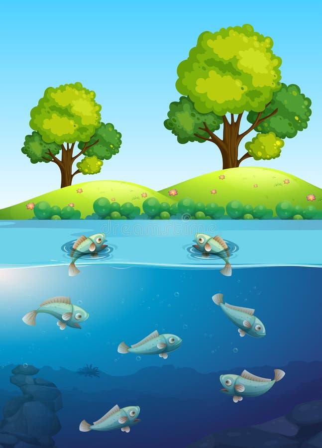 fiska floden vektor illustrationer