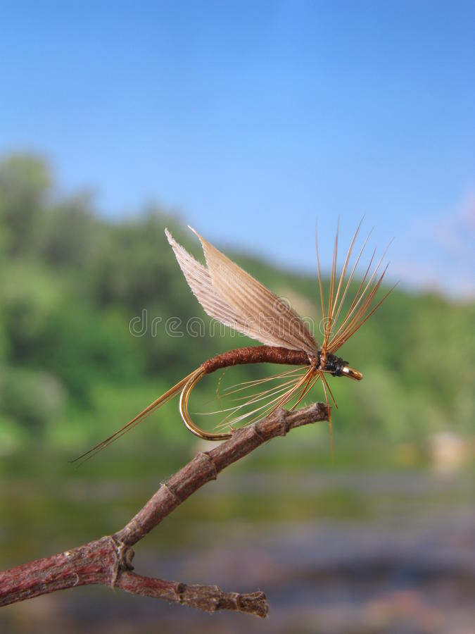 fiska fluga fotografering för bildbyråer