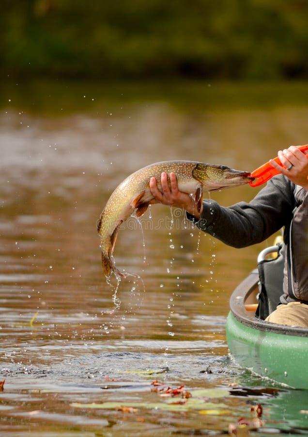 Fiska i en kanot för en pikfisk royaltyfri foto