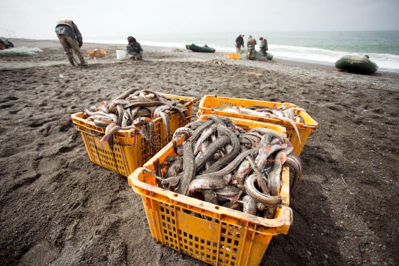 Fiska Kamchatka halvö royaltyfri bild