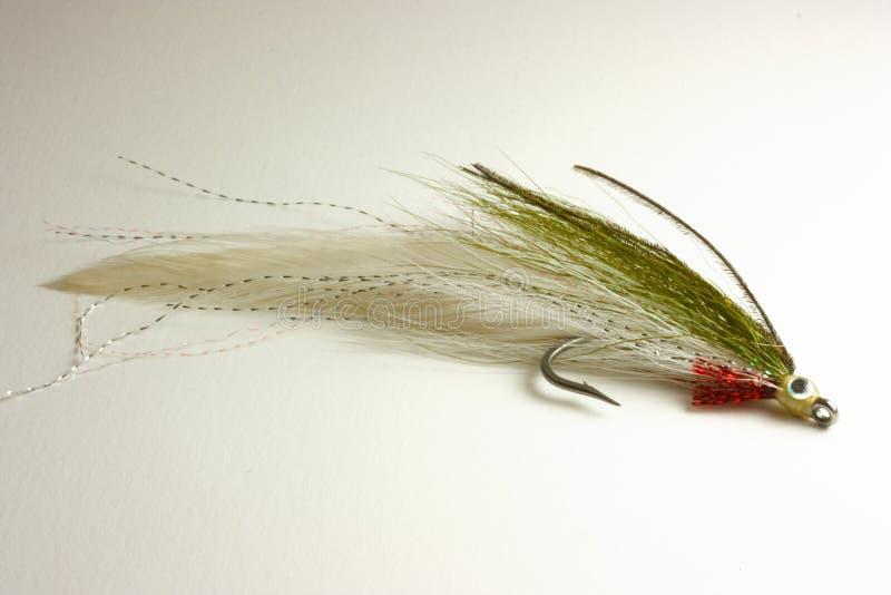 fiska klipsk dragforell arkivfoto