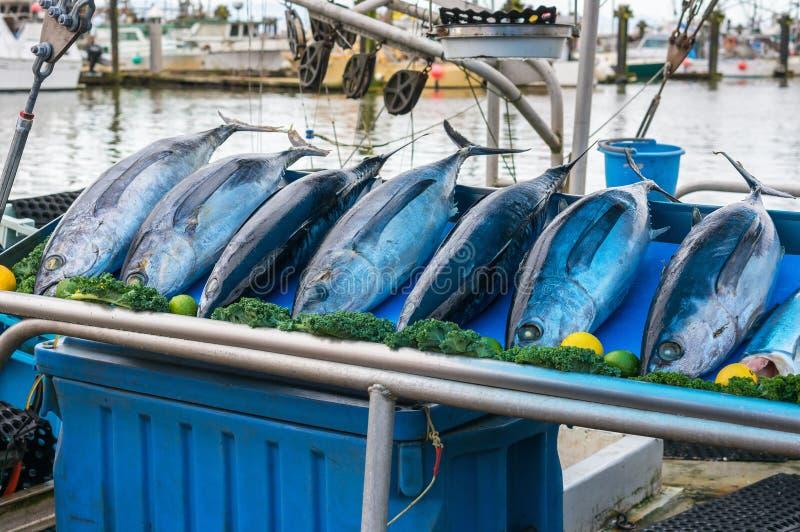 fiska marknaden arkivbilder