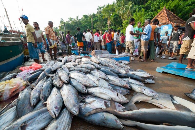 Fiska marknaden i Mirissa royaltyfri fotografi