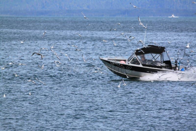 Fiska med fiskmåsar royaltyfria foton
