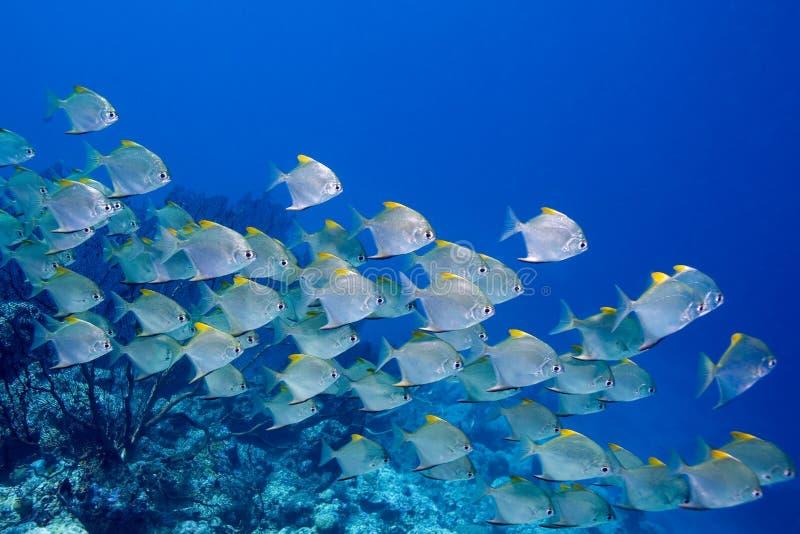 fiska skolan royaltyfri bild