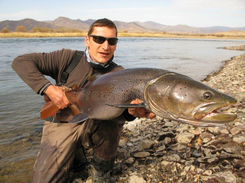Fiska - taimen som fiskar i Mongoliet fotografering för bildbyråer