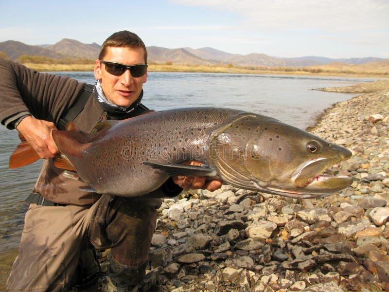 Fiska - taimen som fiskar i Mongoliet royaltyfria foton