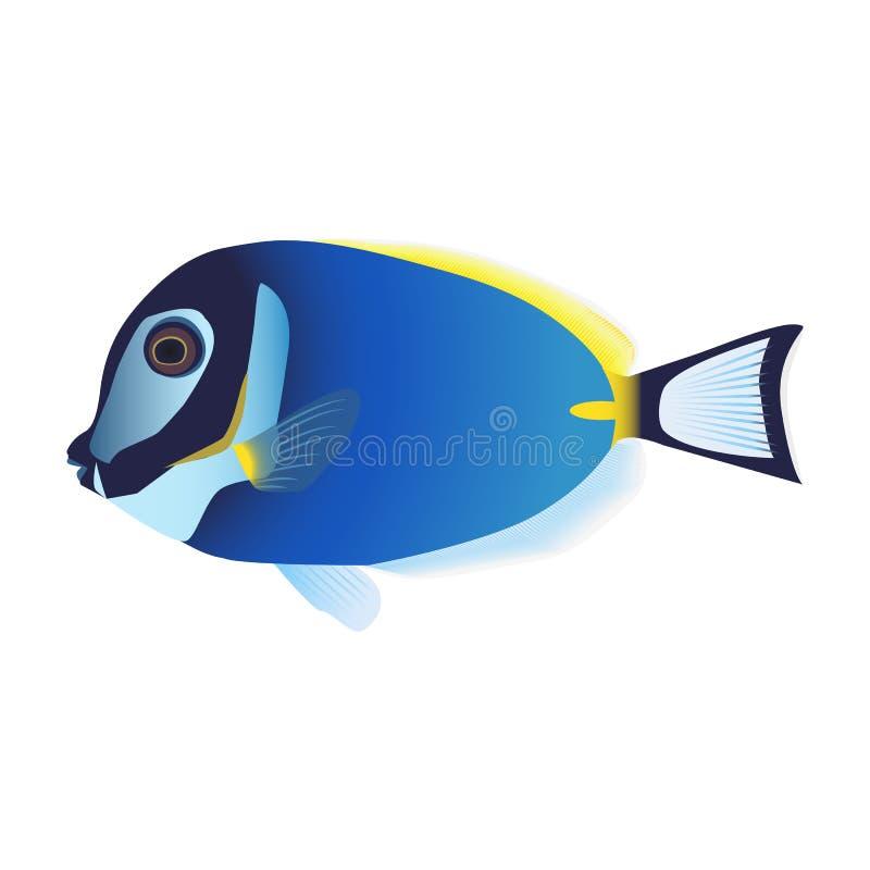 FiskAcanthurusleucosternon på en vit bakgrund stock illustrationer