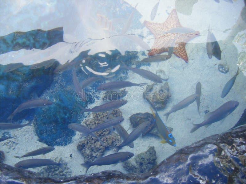 fiskar arkivbilder