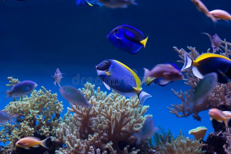 Fiskar för korallrev royaltyfria foton