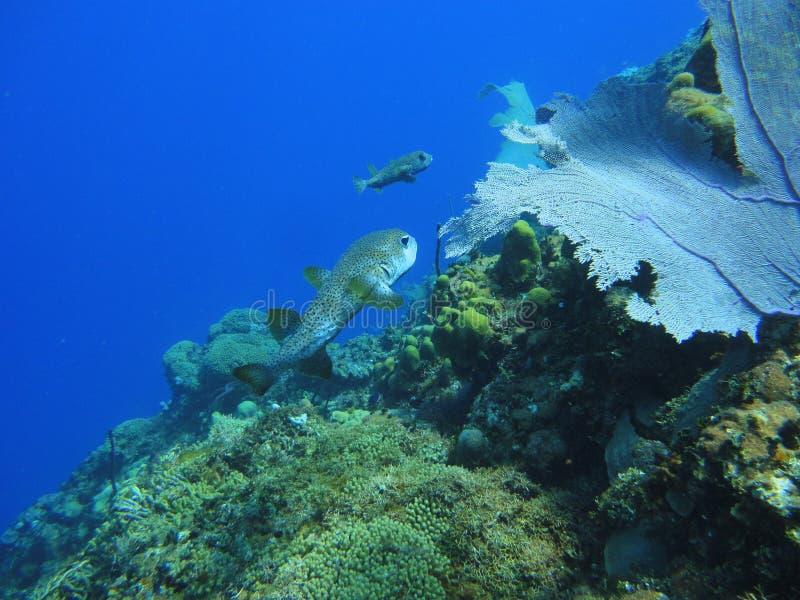 Fiskar och korall på havsbottnen royaltyfria foton
