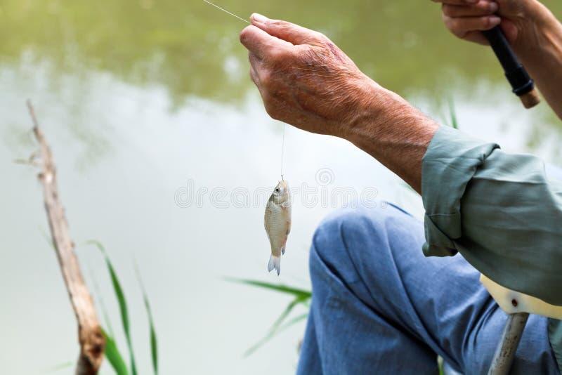 Fiskare fångad liten braxenfisk royaltyfria bilder