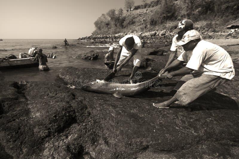 Fiskare Lamalera royaltyfria foton