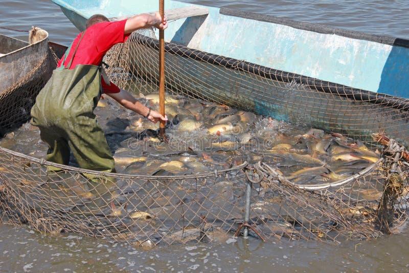 Fiskaren fångar en fisk fotografering för bildbyråer
