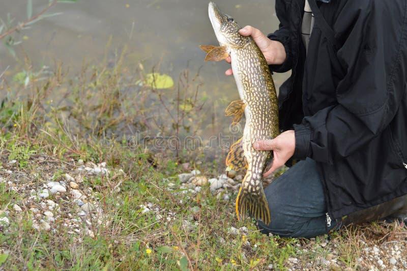 Fiskaren rymmer piken fotografering för bildbyråer