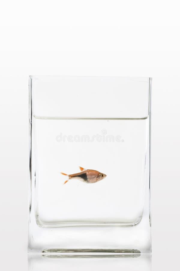 fiskbehållare royaltyfri fotografi