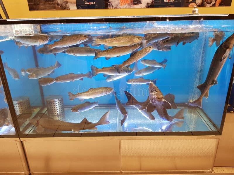 fiskbehållare i ett supermarketvatten arkivfoton