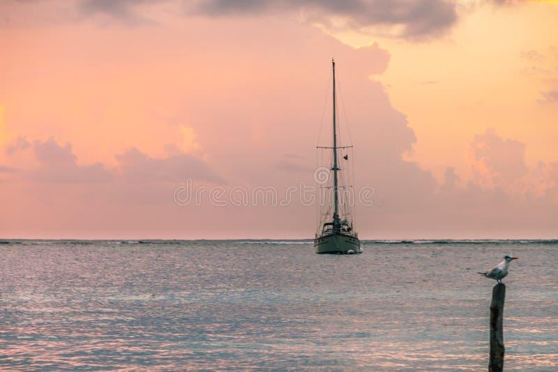 Fiskebåt och Seagull i karibisk soluppgång över havet, Mexi royaltyfri fotografi