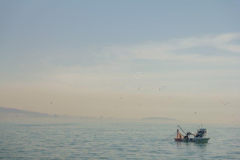 Fiskebåt på Bosporusen som omges av seagulls i Turkiet royaltyfria bilder