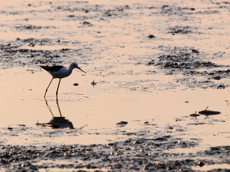 Fiskefågel i räkalantgård arkivfoto