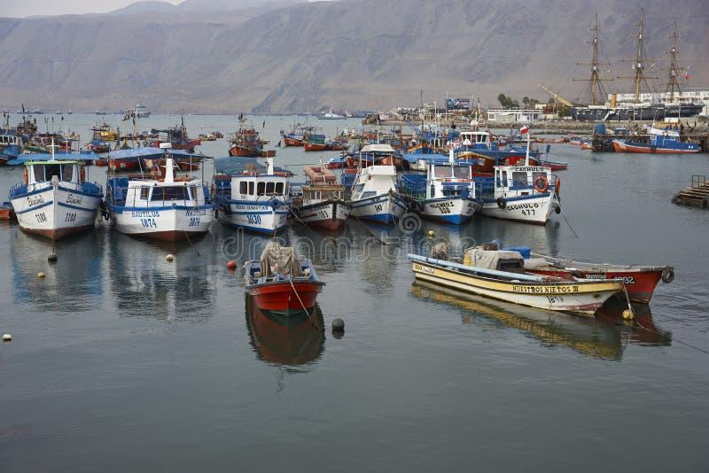 Fiskehamn av Iquique, Chile royaltyfri bild