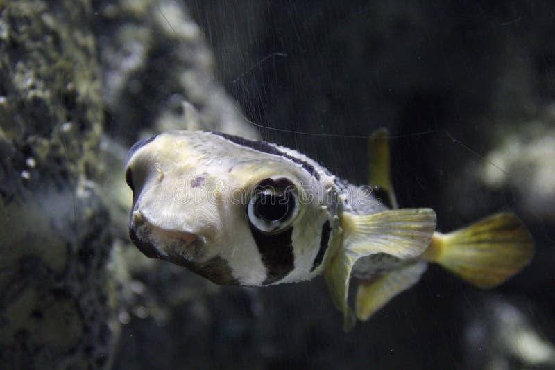 Fisken fotografering för bildbyråer