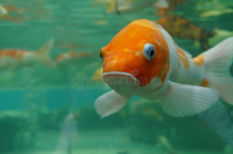 Fisken bevattnar under royaltyfri foto