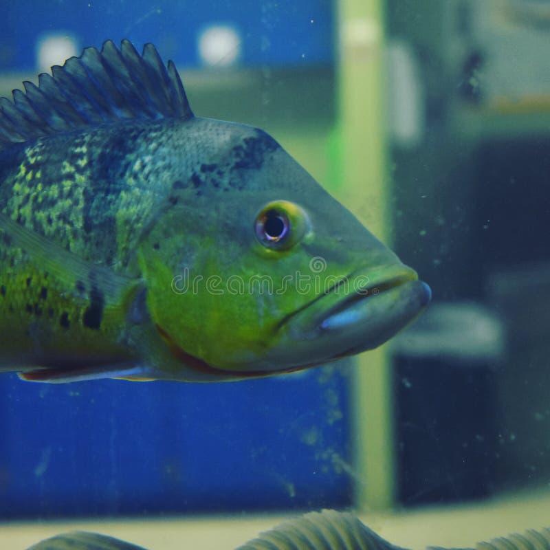Fisken i a tankar royaltyfria foton