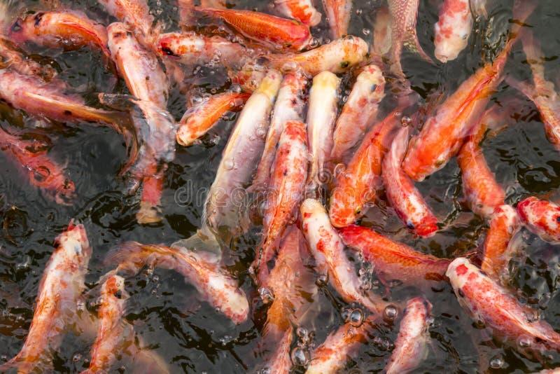 Fisken jagar mat royaltyfri bild