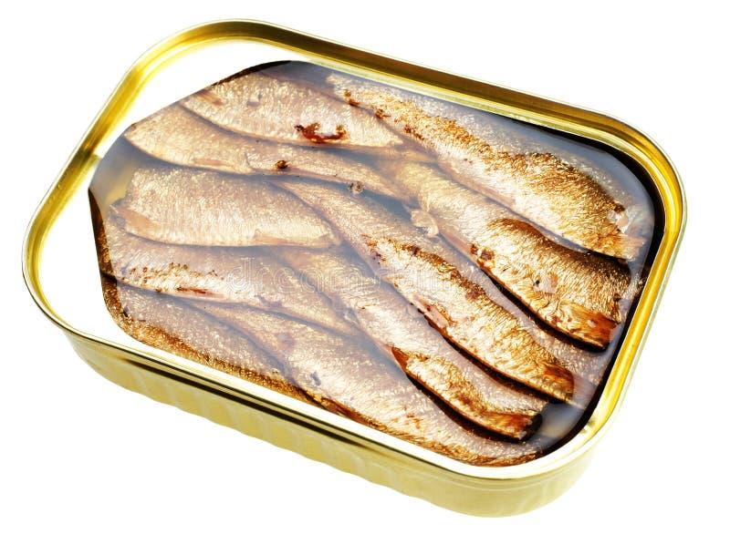 fisken liten stackare på burk royaltyfri fotografi