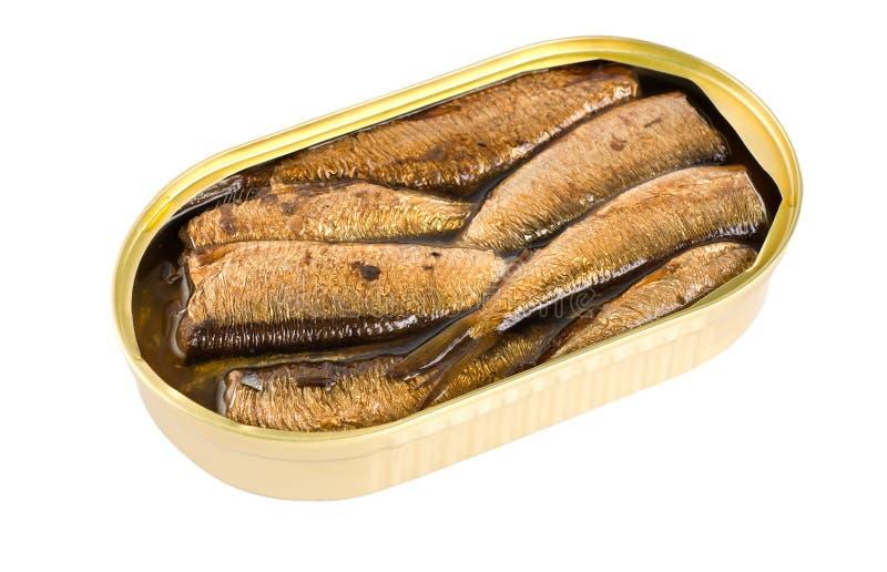 fisken på burk isolerade en liten stackare royaltyfria foton