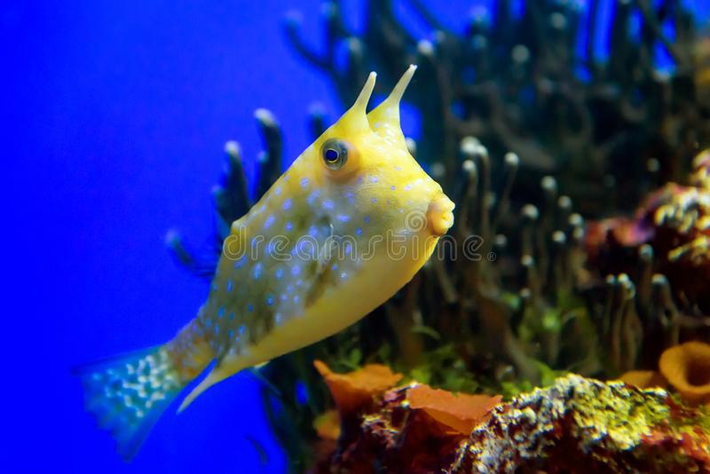 Fisken simmar på korall royaltyfria foton