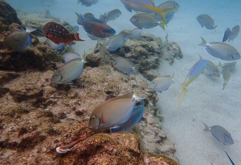 Fisken som simmar bland, vaggar reven i havet royaltyfri fotografi
