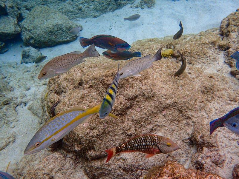 Fisken som simmar bland, vaggar reven i havet arkivfoto