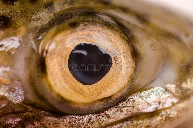 Fisken synar arkivbild