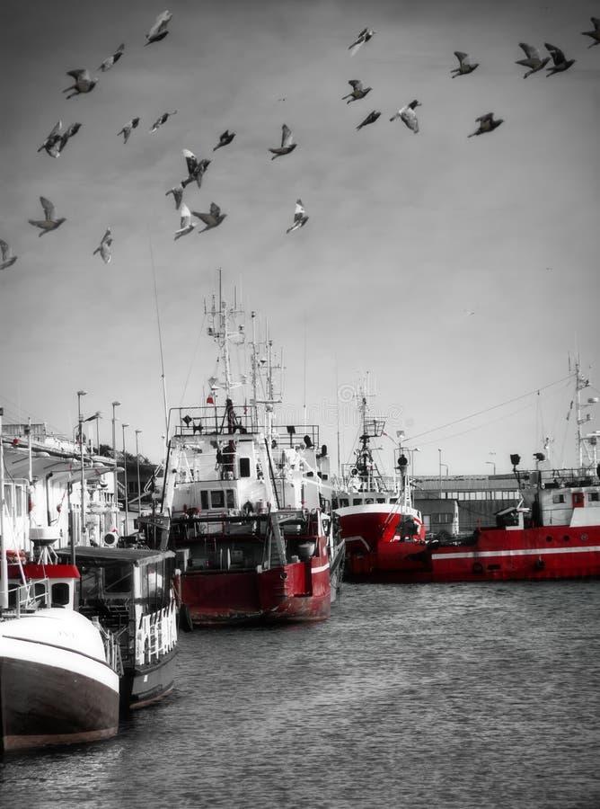 fiskeport royaltyfri foto