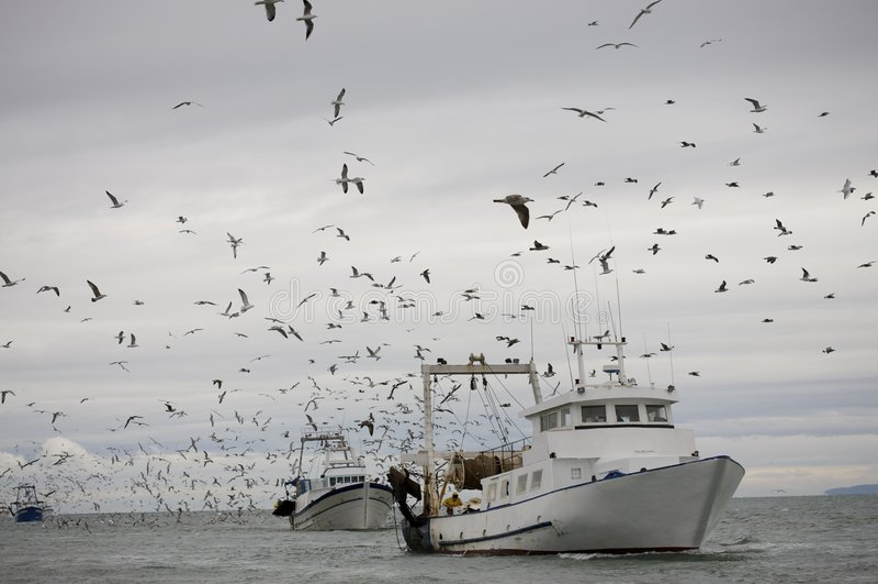 fiskeri fotografering för bildbyråer