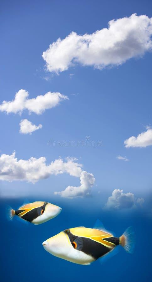 fiskflyg royaltyfri foto