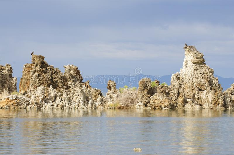 Fiskgjuse som överst bygga bo av tufas royaltyfria bilder